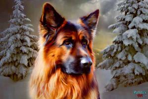 Sheepdog by makiskan