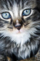 kittens V by apokalupsiseschaton