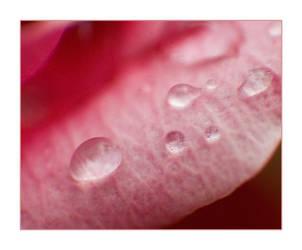 Teardrops from Heaven... by jkiner