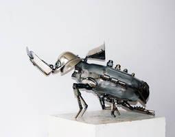 Rhinoceros beetle by Muti-Valchev