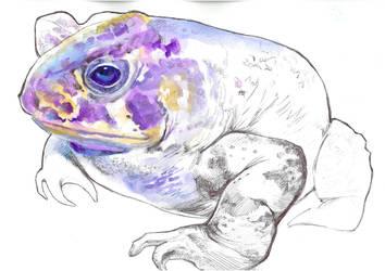 Frog by Muti-Valchev