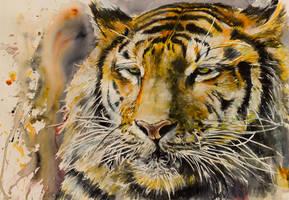 Tiger by kovacsannabrigitta