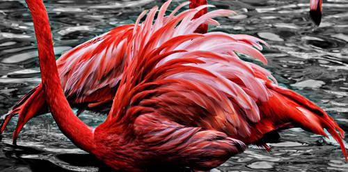 0002  Flamingos (Detail) by Fotomonta