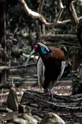0001  Tropical Bird by Fotomonta