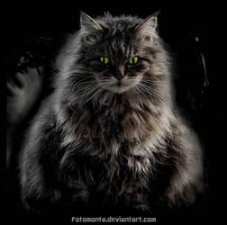 Queen Fluff by Fotomonta