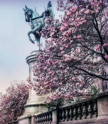 Magnolias by AliaChek