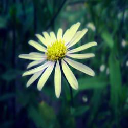 cool daisy by shadowofgambit