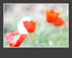 3 poppies by MissUmlaut
