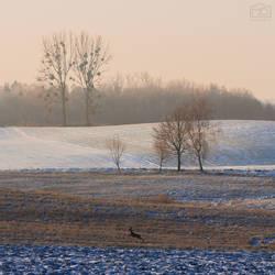 Frosty Morning III by Buszujacy-w-zbozu