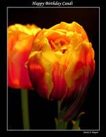Happy Birthday Candi by David-A-Wagner