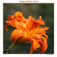 Happy Birthday Awais by David-A-Wagner