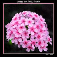 Happy Birthday Sherstin by David-A-Wagner