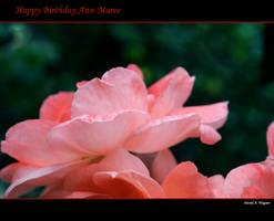 Happy Birthday Ann-Maree by David-A-Wagner