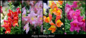 Happy Birthday Miriel by David-A-Wagner
