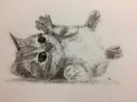 Itty Bitty Kitty by Charcoal-Longfellow