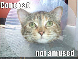 Cone Cat Not Amused by PhantomisErik