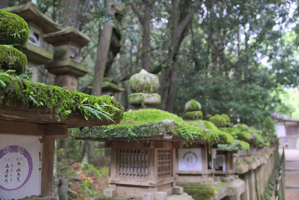 Nara by Kaltenbrunner