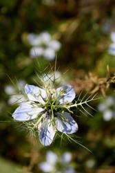 flower1 by Jerema