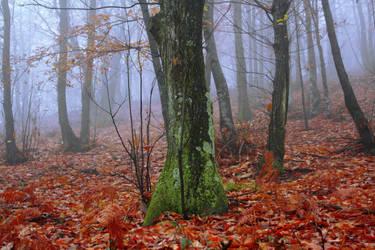 autunno by Jerema