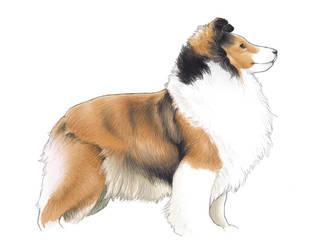 Shetland Sheepdog Sketch by Alkahla
