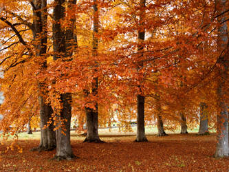 Color Fall by sandrability