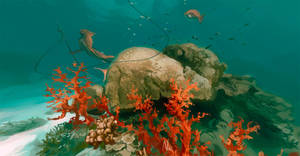 Coral reef [360 Panorama] by OrangeSavannah