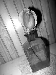rose in vase bw 12/07/18 by TigerWaffle
