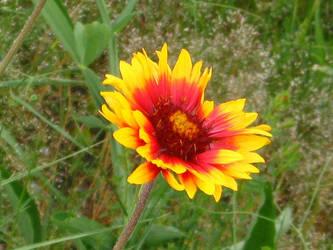 Cheerful flower. by Regenstock