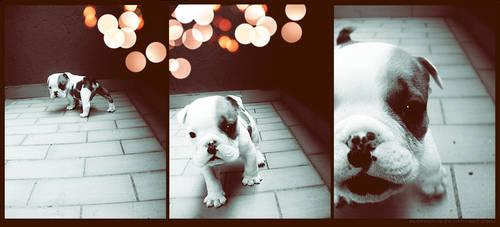 Hi Puppy by Alephunky