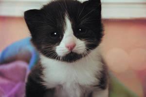 Hello kitten by Alephunky