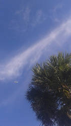 Plane And Palm Tree by raysona