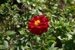 Flower by Mottcalem