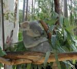 Eucalyptus by NeonWhispers