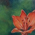 Orange Lily by Plyesdayk