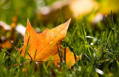 Leaf by SebastianSkarp