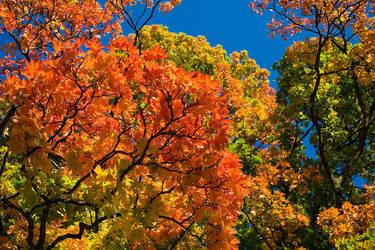 Fall colors by SebastianSkarp