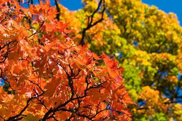 Fall colors II by SebastianSkarp