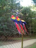 Scarlet Macaws by Ryosuke01