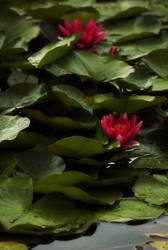 Red by dark-cheshire