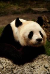 Panda by dark-cheshire
