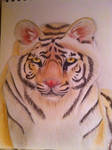 Traditional Watercolor Pencils: Tiger by speedysoftball13