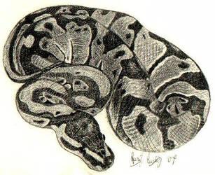 Ball Python II by Cerulean-Serpent