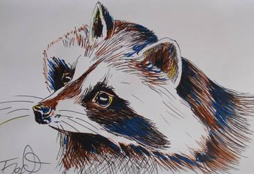 Raccoon by ZiskaJa
