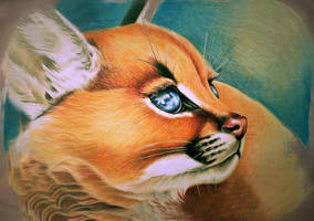 Blue eyed Cat by ZiskaJa