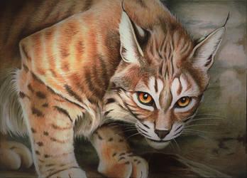 Voracious Bobcat by ZiskaJa