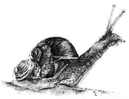 Snail by Vomajda