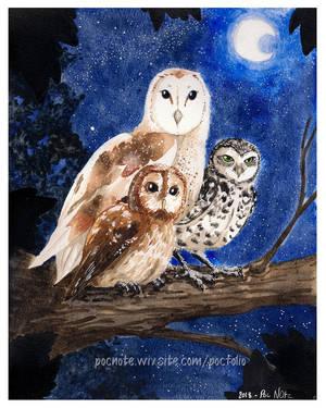 Owls by Pochi-n-Puniah