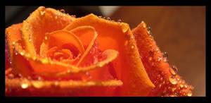 Orange by Jacks-Eating-Santa