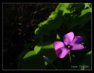 Violetta by Turpiloquio