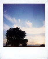 polaroid 9 by mr-amateur
